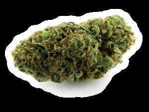 dispensarioandino-marihuana-medicinal-flores-cogollos