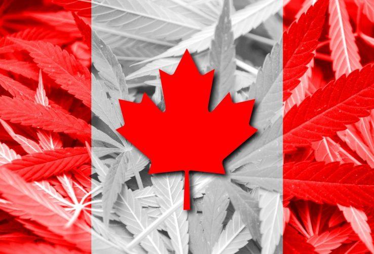dispensarioandino-marihuana-medicinal-canada